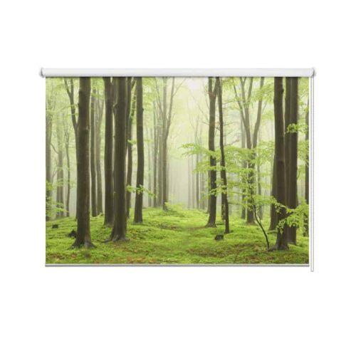 Rolgordijn Ochtendwandeling in bos
