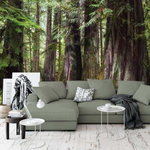 Fotobehang Oude bomen in bos