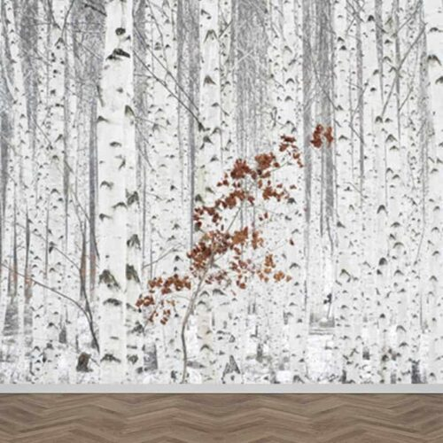 Fotobehang Berkenbomen bos