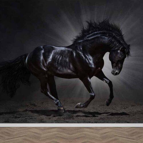 Fotobehang Zwart paard