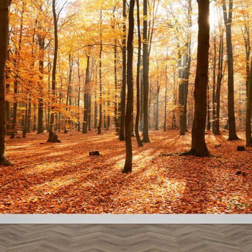 Fotobehang Kleurrijk herfstbos